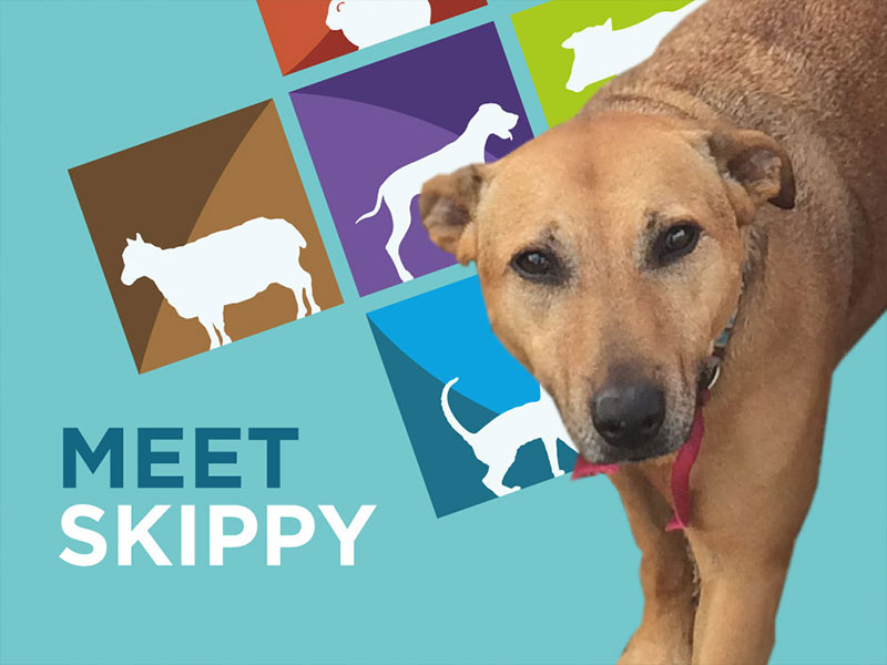 Skippy goes to surgery - Daleside Vets